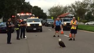 Police and firefighters protect injured Bald Eagle on Florida road - Video