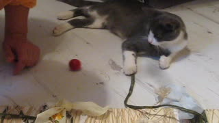 Cute kitty learns how to scratch - Video