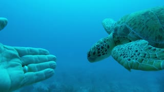 Deep sea divers have incredible encounter with sea turtle - Video