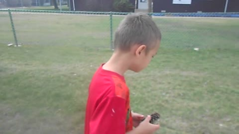 Boy eats a pine cone (his daddy's fault)