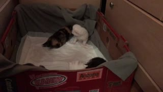 kitties trying to get out of the box, cute - Video