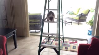 Can the Cute Cat Get Down  - Video