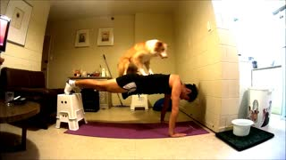 Talented dogs help owner exercise - Video