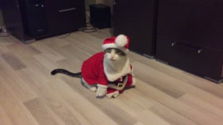 Cat in Santa outfit plays dead on command - Video