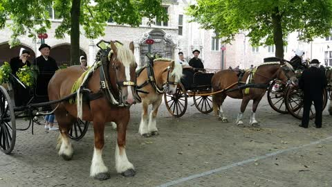 Beautiful dutch horses and dressed up people on National Day