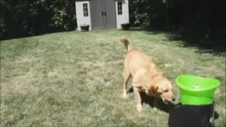 Cute and resourceful dogs - Video