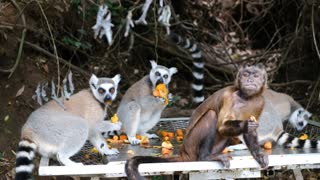 monkeys sharing food with other Animals