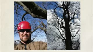 tree service lynchburg - Video