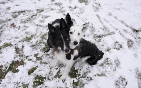 Dogs flawlessly pose for winter photo op