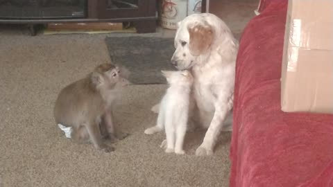 Monkey jealous of dog & cat's loving friendship