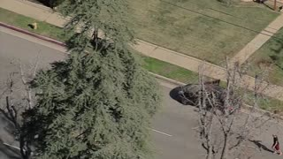 Police Pursuit Leads to Foot Bail & Hilarious Dog Chase