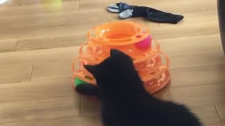 kitten Playing with her ball