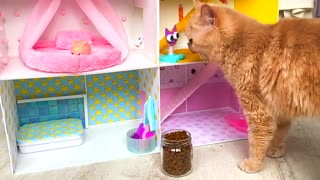 RESCUE the Smallest KITTEN in the World !! And building a NEW HOUSE