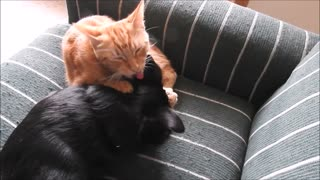 Kitty found a new chew toy - Video