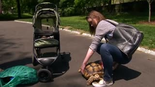 New Yorkers meet therapy reading dogs, friendly tortoise - Video