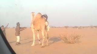 camel wow