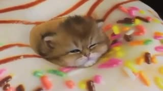 Funny way That Cat is Sleeping - Video