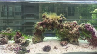 Early Stages of a Reef Tank