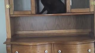 Collab copyright protection - black cat dresser fall fail - Video