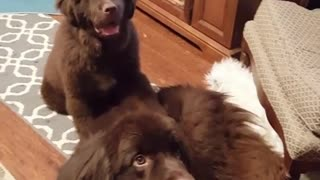 Puppy points out who his best friend is - Video