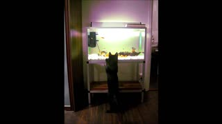 You won't believe how easily this cat gets scared - Video