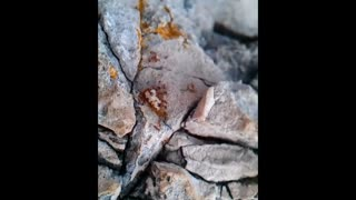 Ants carry piece of bread - Video