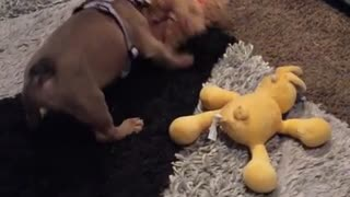 My new little sister is attacking my bear!!! Mom!!! Why aren't you stopping her?! Wait fooor it.... - Video