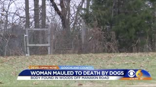 Woman Taking Her Dogs For Walk Is Mauled to Death By Them - Video