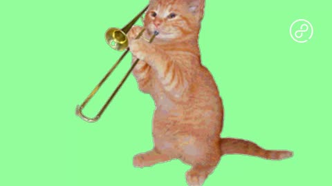 The cat when the music