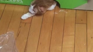 Cat get scared from cat inside box