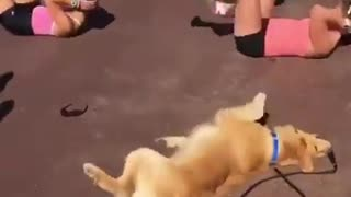 dog exercise - Video