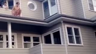 Guy jumps into pool from on top of the roof - Video