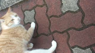 Cat Loves Attention - Video