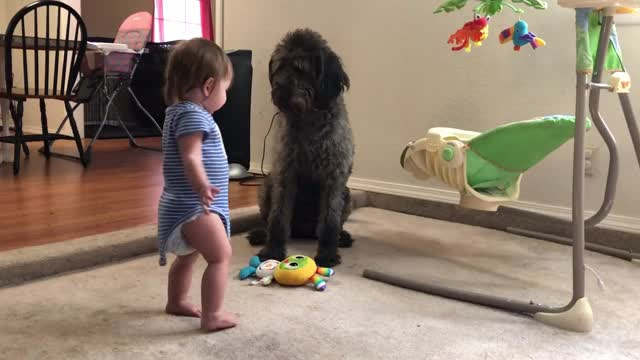 Pooch teaches toddler how to sit
