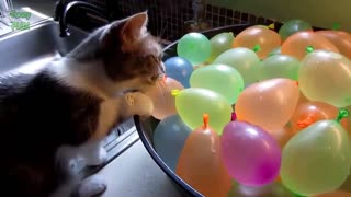 Cats with Balloons, really funny!