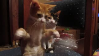 This Collection Of Adorable Cats Is All You Need To See Today! - Video
