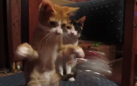 Adorable cats compilation