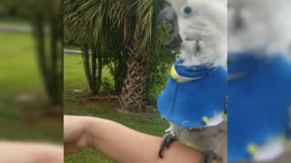 Lucky Umbrella cockatoo