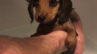 Cute puppy thoroughly enjoys her first bath - Video