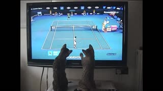 Gatos bengaleses juegan al tenis con Andy Murray - Video