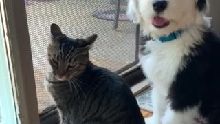 Good boy wants to be friends with kitty