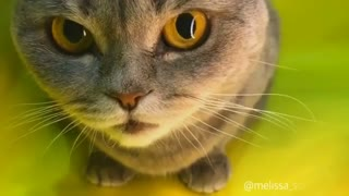 Slow motion shooting for cats & cats photography - Video