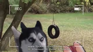 Just a Dog... - Video