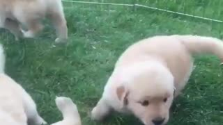 Small cute dogs - Video