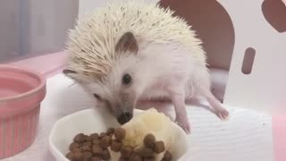The Hedgehog loves Bananas So Much