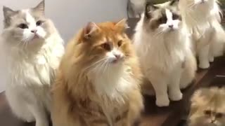 My family cat came together to perform new movie for cats