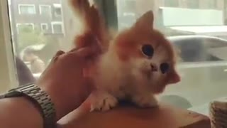 Cutest little floof - Video