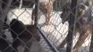 Monkey and Dog Love Compatibility and Relationship  - Video