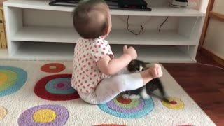 Kitten Keeps Trying to Play with Kiddo