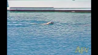 Dog Chases Dolphin In The Water Gets Slapped By Dolphin's Tail